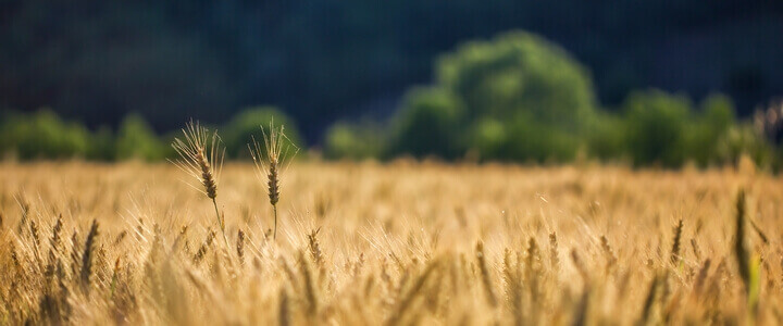 Agricultural Farming and Safety